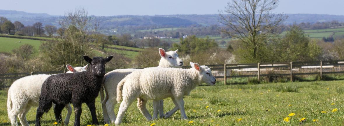 Farm Holidays | Cwmcrwth Farm & Holiday Cottages in Wales